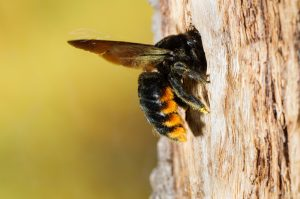 how to get rid of bumble bees in wood