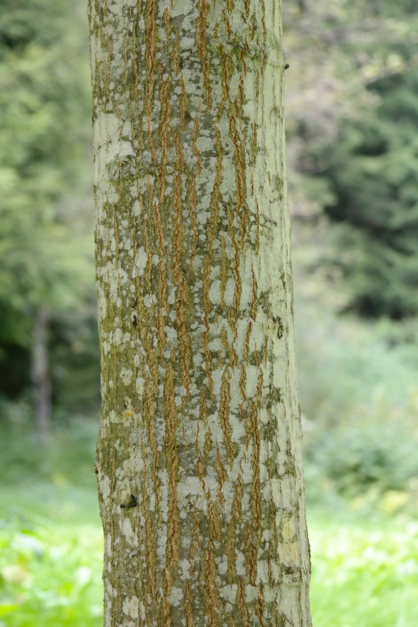 Guide To Tree Identification By Bark The Basic Woodworking